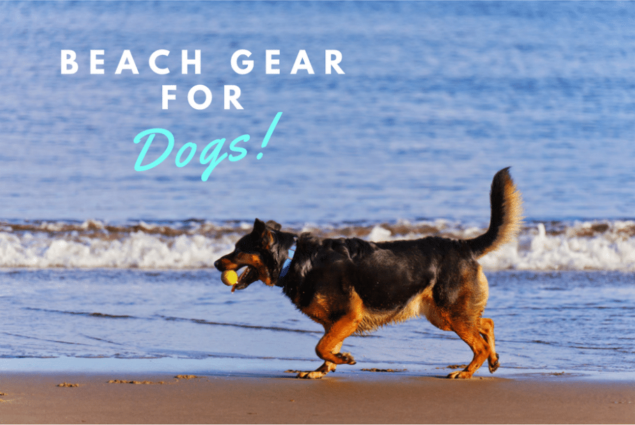 best beach gear for dogs