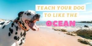 teach your dog to like the ocean