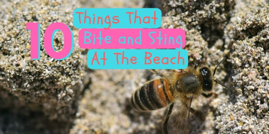 things that bite and sting at the beach