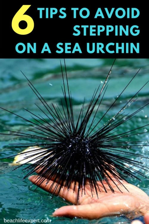tips to avoid stepping on a sea urchin